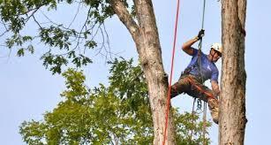 mcallister tree service tree work cornelia ga