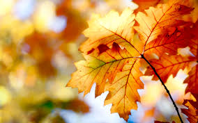 leaf macro autumn hd wallpaper nature and landscape wallpaper