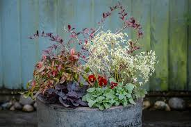 winter containers for colour winter colors garden inspiration