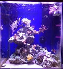 Floating Aquascape Reef2reef Saltwater And Reef Aquarium Forum - tips and tricks on creating amazing aquascapes page 22