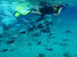jeep snorkel underwater snorkeling with the pantrea jeep tour picture of el cozumeleno