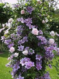 few things make a garden look more romantic than a trellis
