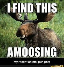 Pun Meme - find this amoosing my recent animal pun post ifunnyco pun meme