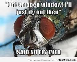 Fly Meme - 41 scumbag fly meme pmslweb