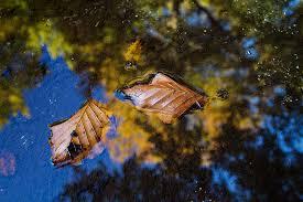 foto bagnate foglie bagnate con riflessi foto immagini piante fiori e