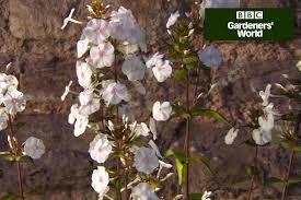 Fragrant Climbing Plants - five plants to hide a garden shed gardenersworld com