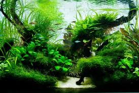 Aquascape Design Aquascape Design Ideas Android Apps On Google Play