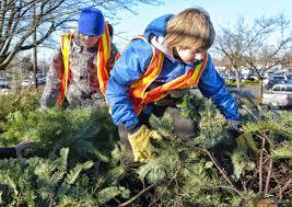 100 christmas tree preservative home depot energy efficient