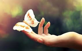 dr reich s butterfly touch