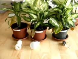 how does light affect plant growth artificial lighting products plant growth experiment results youtube