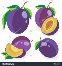 vector plums collection whole cut blue stock vector 343171256
