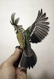beautiful wood and paper bird sculptures by zack mclaughlin bird