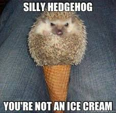 Hedgehog Meme - 25 adorable hedgehog memes that will make you go eeeeeee