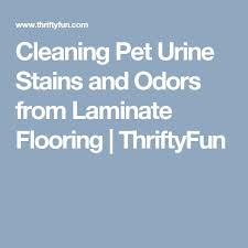 the 25 best cleaning pet urine ideas on pet urine