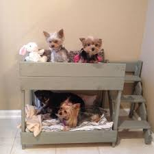 Doggie Bunk Beds 8 Adorable Bunk Bed Ideas For Pets About Pet