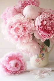 Peony Flowers by 914 Best Peony Images On Pinterest Flowers Flower Gardening And