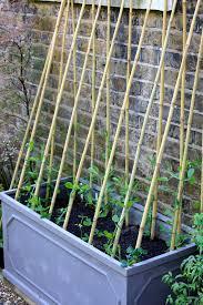 easy pea trellis sweetpeas in a trough london may 2014 gardening pinterest