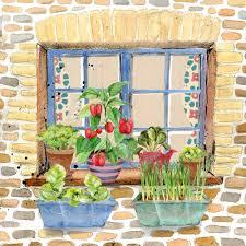 window box garden autumn winter rocket gardens