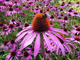 native plant database gardening tips to help baby birds u0026 pollinators 7 plants you u0027ve