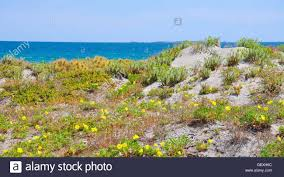 australia native plants sandy coastal dunes with native plants and the turquoise indian