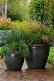 how to use grasses in containers hgtv grasses and gardens