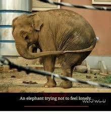 Elephant Meme - i m not crying album on imgur