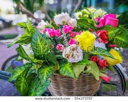 Plastic Flowers Artificial Flowers Stock Images Royalty Free Images U0026 Vectors