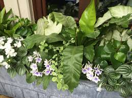 What U0027s New by 100 White Flower Plant Trillium Grandiflorum Wikipedia 1038