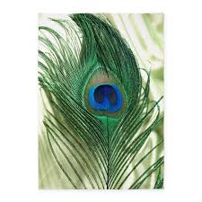 Peacock Area Rugs Peacock Rugs Peacock Area Rugs Indoor Outdoor Rugs
