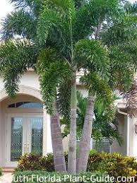 South Florida Landscaping Ideas South Florida Tropical Landscaping Ideas Our Services North