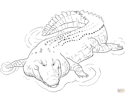 crocodile coloring pages free coloring pages