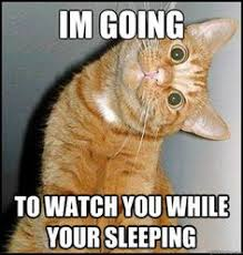 Funny Meme Cat - top 30 funny cat memes funny cat memes memes humor and memes