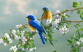 bird wallpaper hd bird desktop wallpaper