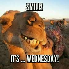 Camel Meme - happy hump day meme images and pics