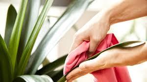 Wohnzimmerm El Bei H Fner Azaleenpflege Tipps Von Gartenexperte Elmar Mai Zdfmediathek