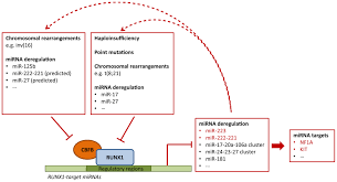 ijms free full text runx1 a microrna hub in normal and