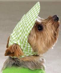 bartender resume template australian terrier club of america 44 best pet dress up event images on pinterest adorable animals