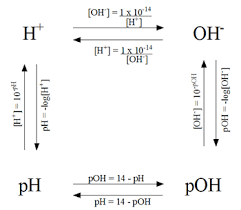 Ph Worksheet Calculations Involving Ph And Poh