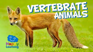 vertebrate animals educational video for kids youtube