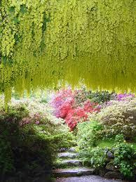 plante vivace soleil images gratuites arbre la nature fleur lumière du soleil