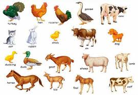 animals pictures with names widescreen 2 hd wallpapers amagico