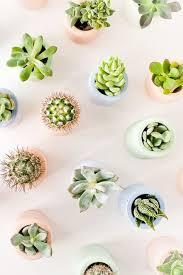 482 best plant images on pinterest plants succulent plants and