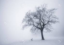 Park Bench Scene Winter Scene Of Leafless Tree And Park Bench In Fog Stock Photo