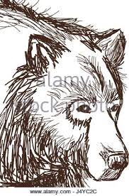 drawing bear face animal stock vector art u0026 illustration vector