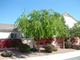 Texas Landscape Plants by 23 Best Trees Images On Pinterest Backyard Ideas Shade Trees