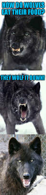 Insanity Wolf Memes - bad pun insanity wolf viral memes imgflip