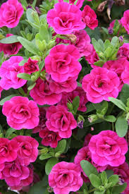 fall flowers in season image information
