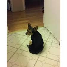 bedlington terrier seattle lost dogs in lakebay wa lost my doggie