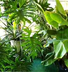 Indoor Tropical Plants For Sale - houseplants clean indoor air pollution home top plants the old