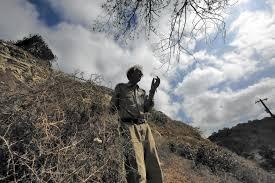 Tumbleweed Drought Triggers Southern California Tumbleweed Infestation La Times